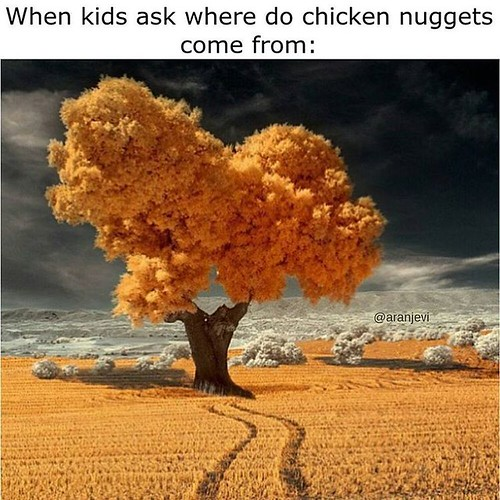 Very Rare Picture Of A Chicken Nugget Tree. #chickennugget