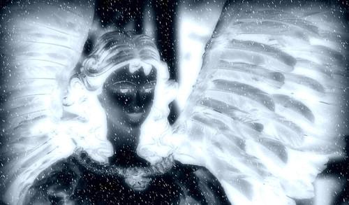 snow-angel-header