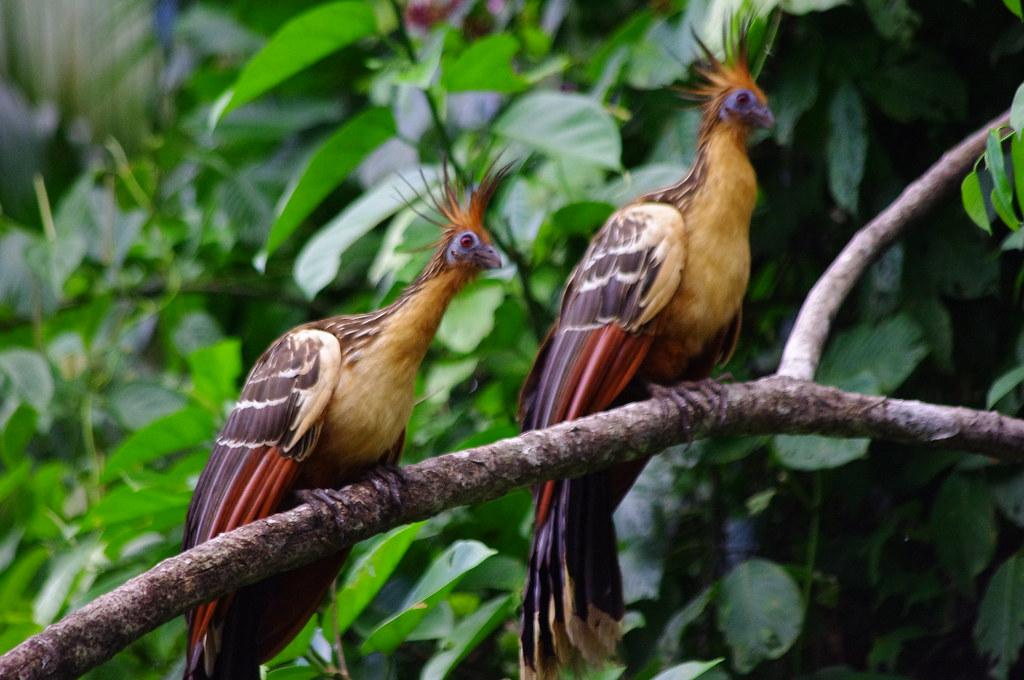 Bird Orinoco Delta Delta Del Orinoco Delta De Lorenoqu