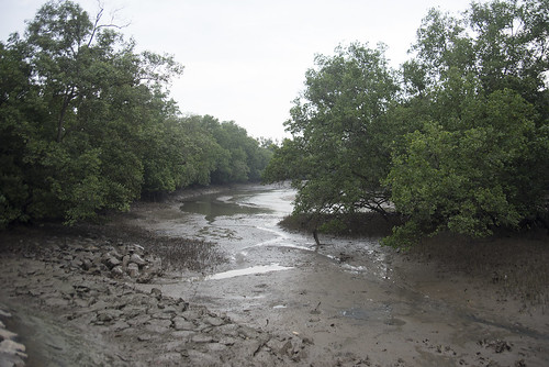 Changi Creek mangroves after oil spill in Johor Strait, Jan 2017