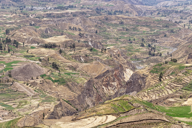 Corn fields in the Colca valley