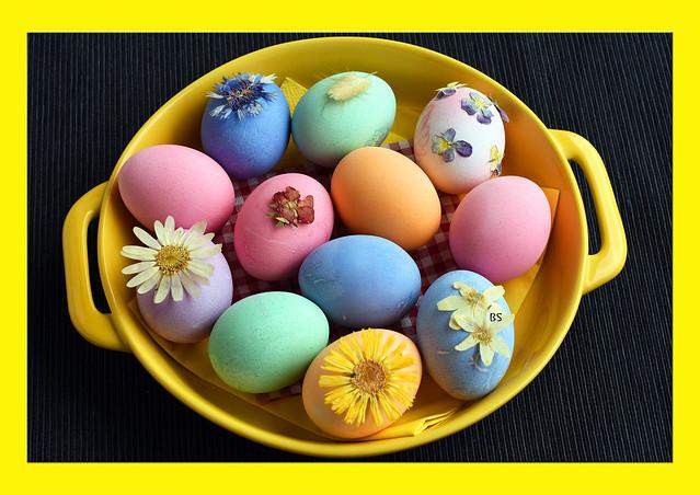 Gefärbte Ostereier ... pastellfarben ... gepresste Blumen ... Foto: Brigitte Stolle