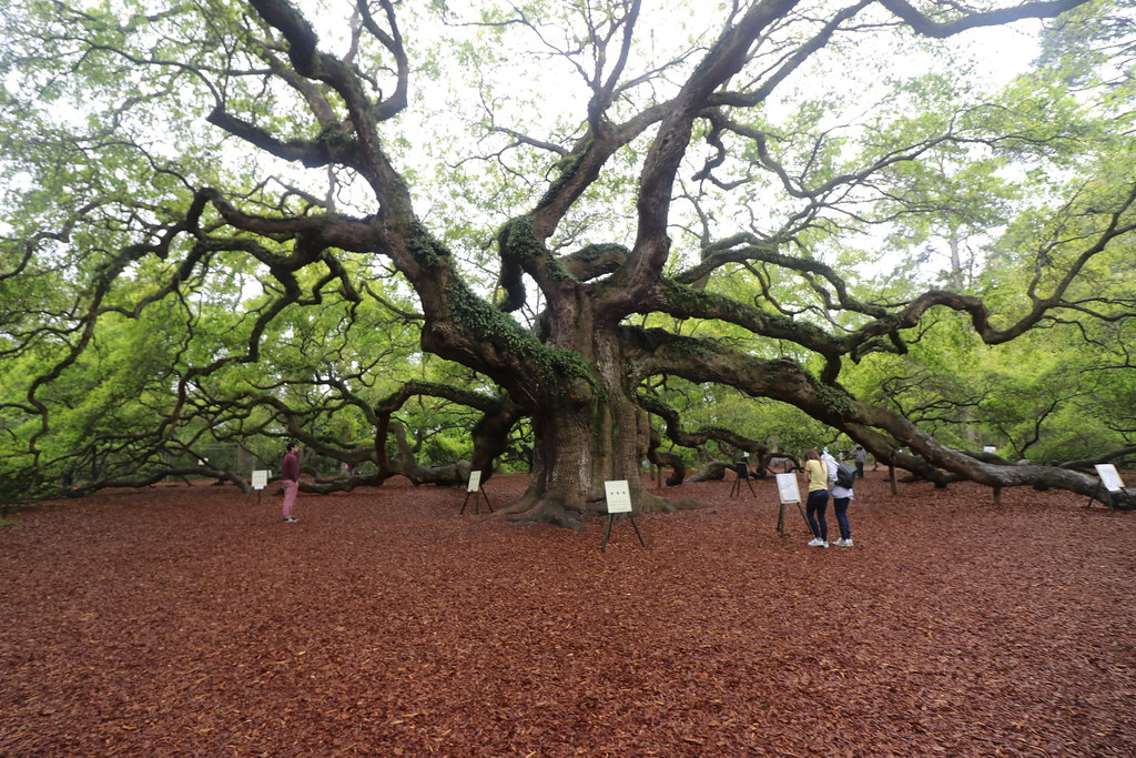 Oak Island Tree Of Life Theory