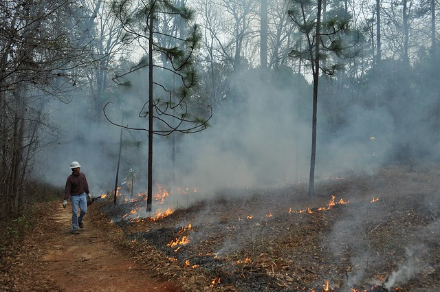 Faculty and students conduct a prescribed burn at the Kreher Preserve