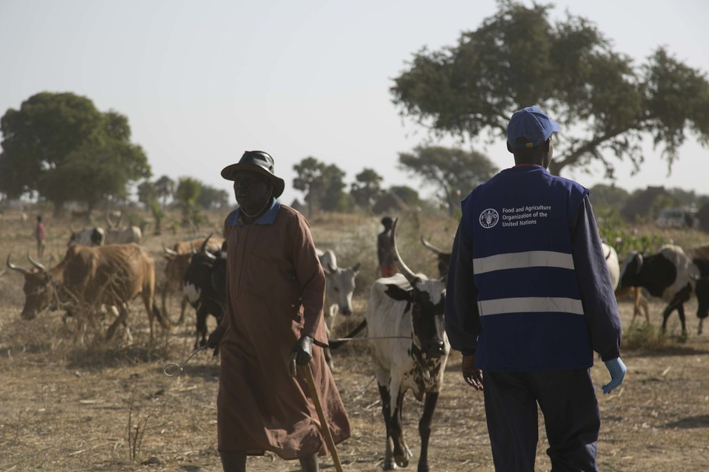 cattle keepers and their animals at the vaccination site i