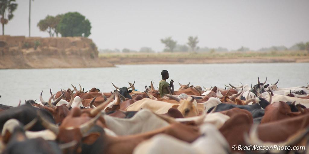 非洲尼日河。Bradley Watson(CC BY-NC-ND 2.0)