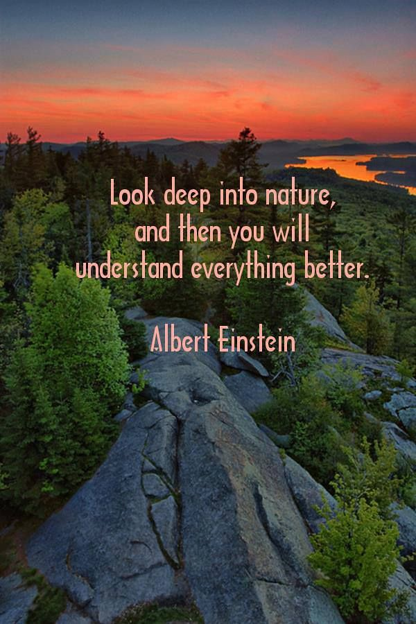 Citations Dalbert Einstein Look Deep Into Nature And T Flickr