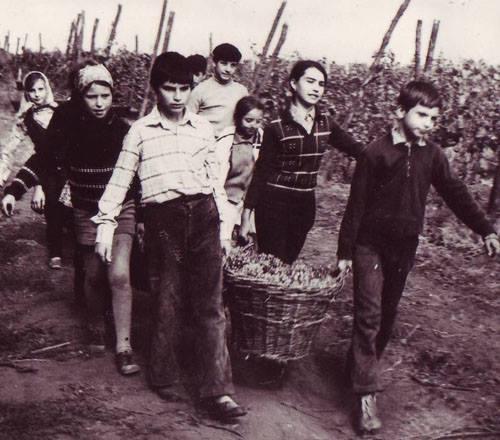 practica agricola a elevilor