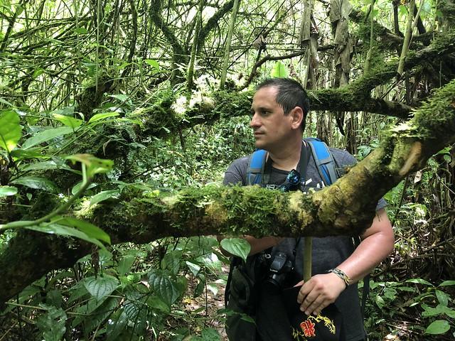 Sele en el Parque Natural Obo (Santo Tomé y Príncipe)