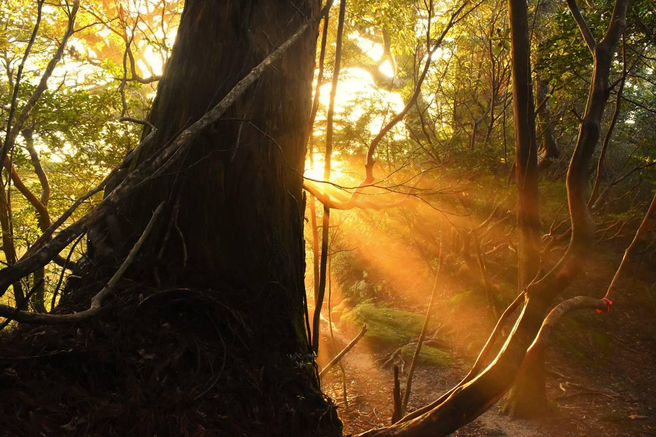 屋久島の森の朝