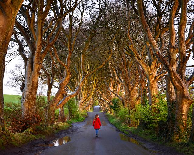 Lights in the darkness, una de las mejores fotos del bosque de Juego de Tronos en Irlanda