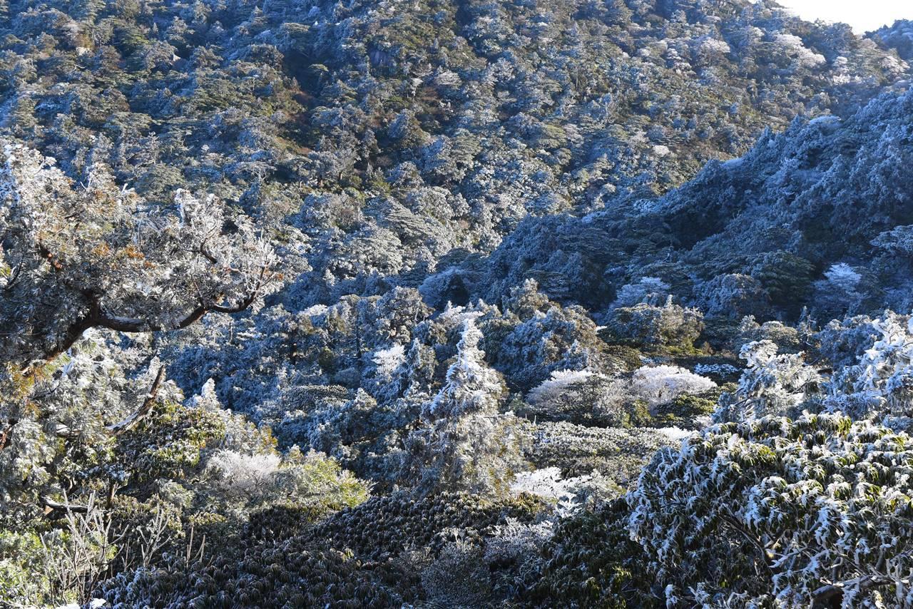 屋久島・宮之浦岳の樹氷
