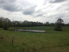 Saggus Pond