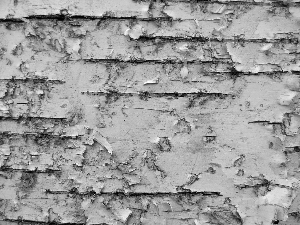 Birch Bark | The Chabo... Rustic Birch Wood Furniture