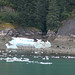 Sawyer Glacier Ice with Black Bears 2