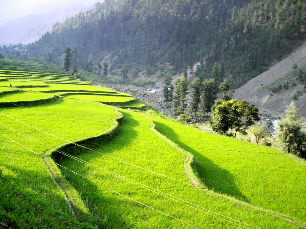 Lushed Rice Fields In Leepa Valley Photograph By Umiar Sh Flickr