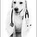 Dr. Ramona