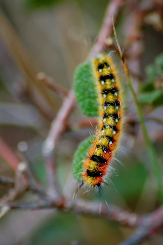 Caterpillar | by Emerging Birder