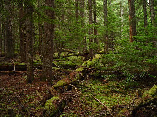 Understory In North Idaho Forest This Scene Looks More