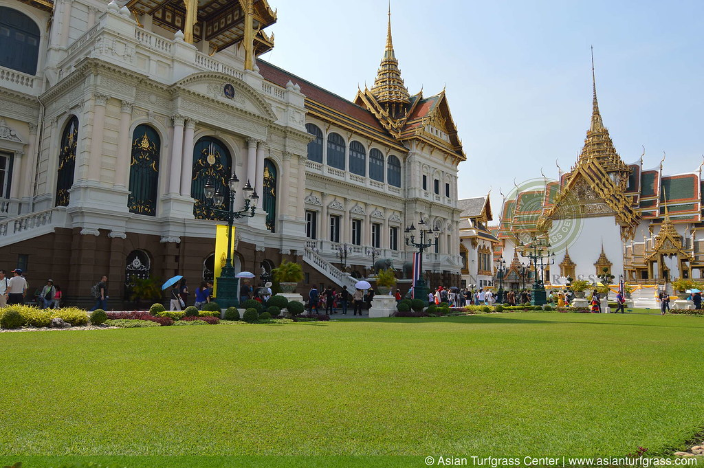 lawn of javagrass in Bangkok