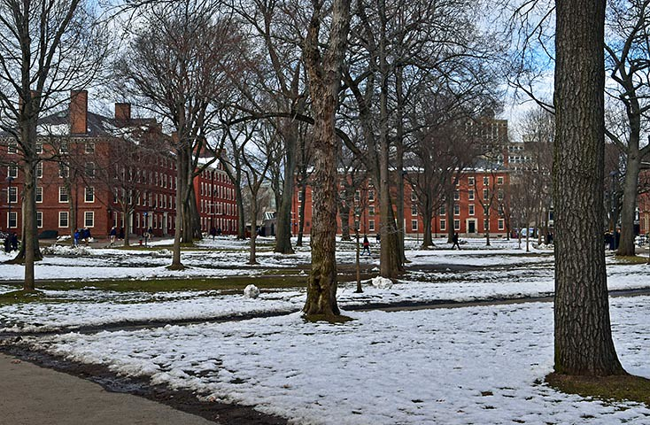 Image result for winter harvard