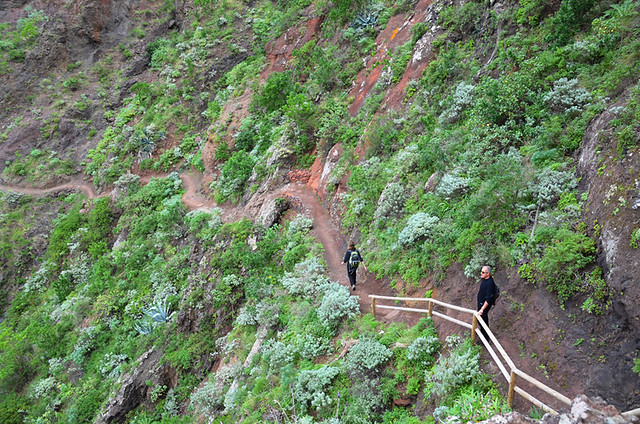 Path on Afur route, Anaga, Tenerife