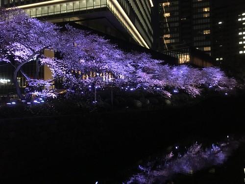 東京ガーデンテラス紀尾井町の桜 2018.3