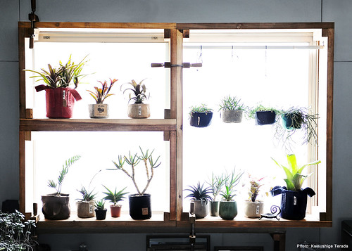 Window Plant Shelf | by Katsushige Bon Terada