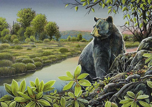 Image of Maryland Black Bear Conservation Stamp Design Contest Winner for 2018, Looking Back by Steve Oliver