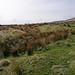 Hadfield Reservoir walk