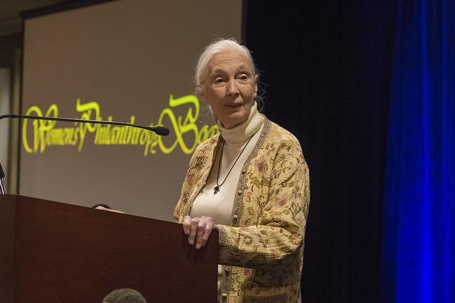 Jane Goodall at a podium