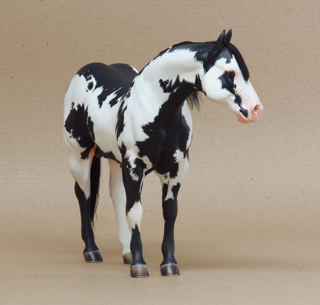 overo nohuanda equine art flickr