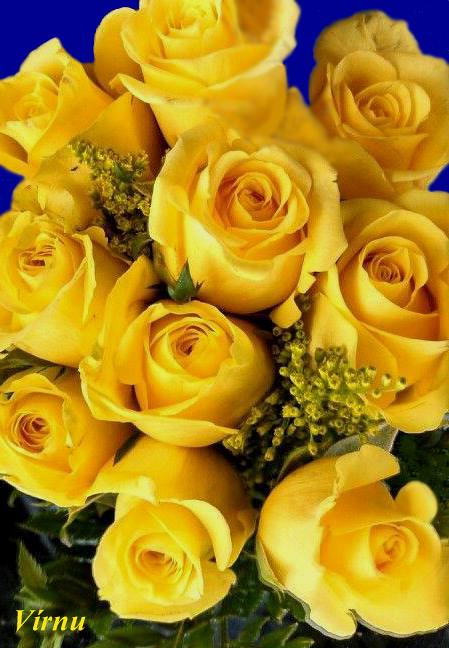 Rosas Amarillas Vírnu Flickr