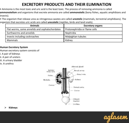 Important Notes of Biology for NEET: Excretory Products and Their Elimination