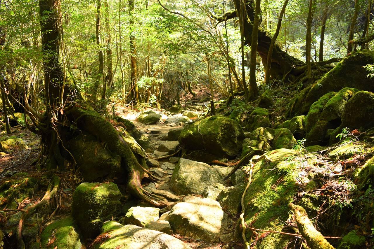 白谷雲水峡 登山道