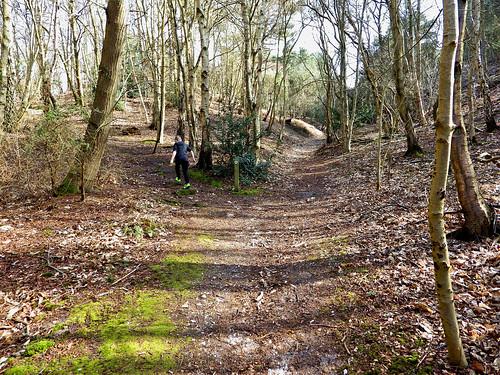Kelling Heath Forest