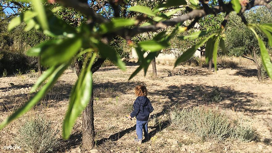 niño en un campo de almendros