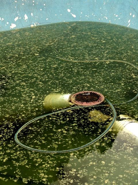 Pool And Algae Zen Sutherland Flickr