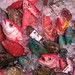 Fish Market - Okinawa
