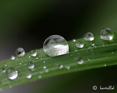 Macro 3 - Water Droplet 01 | by kartoffel