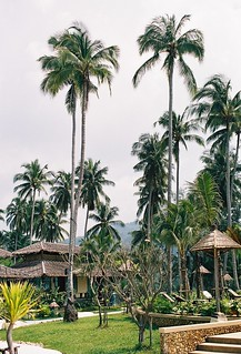 Coconut Trees, Tropicana Resort, Koh Chang, Thailand | by tarotastic