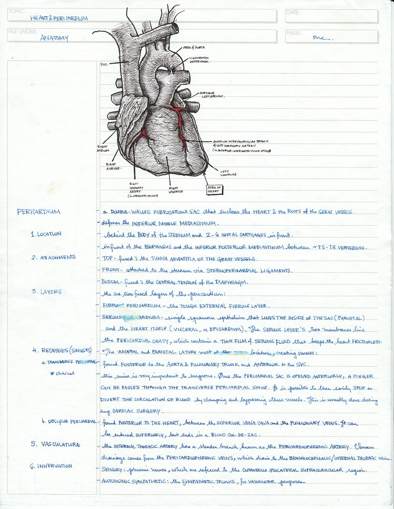 Anatomy Notes: Heart | Update: I re-scanned this page in its… | Flickr