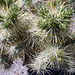 Prickly!