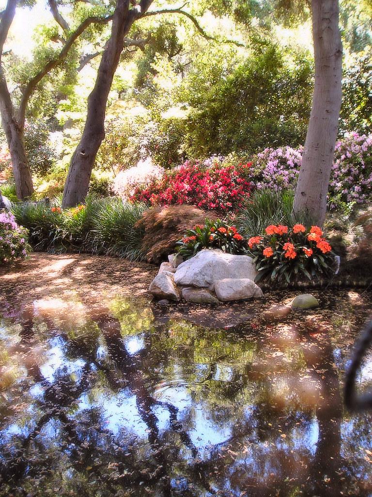 Romantic Forest | Taken at Descanso Gardens in Flintridge, C… | Flickr