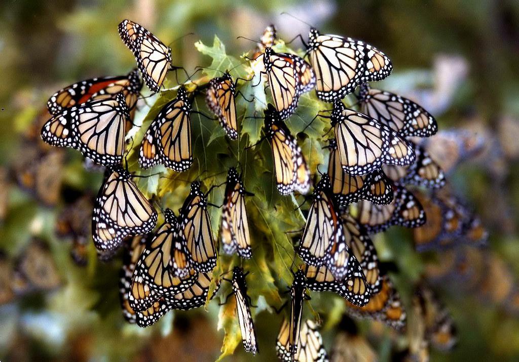 D Butterfly Wall Decor Ideas