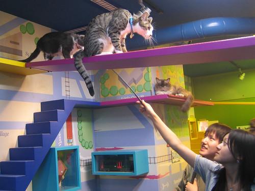 Nekobukuro Cat S House