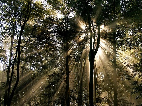Sunbeams in the Forest for Imapix  (R.I.P.) | by algo