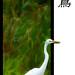 egret egress...