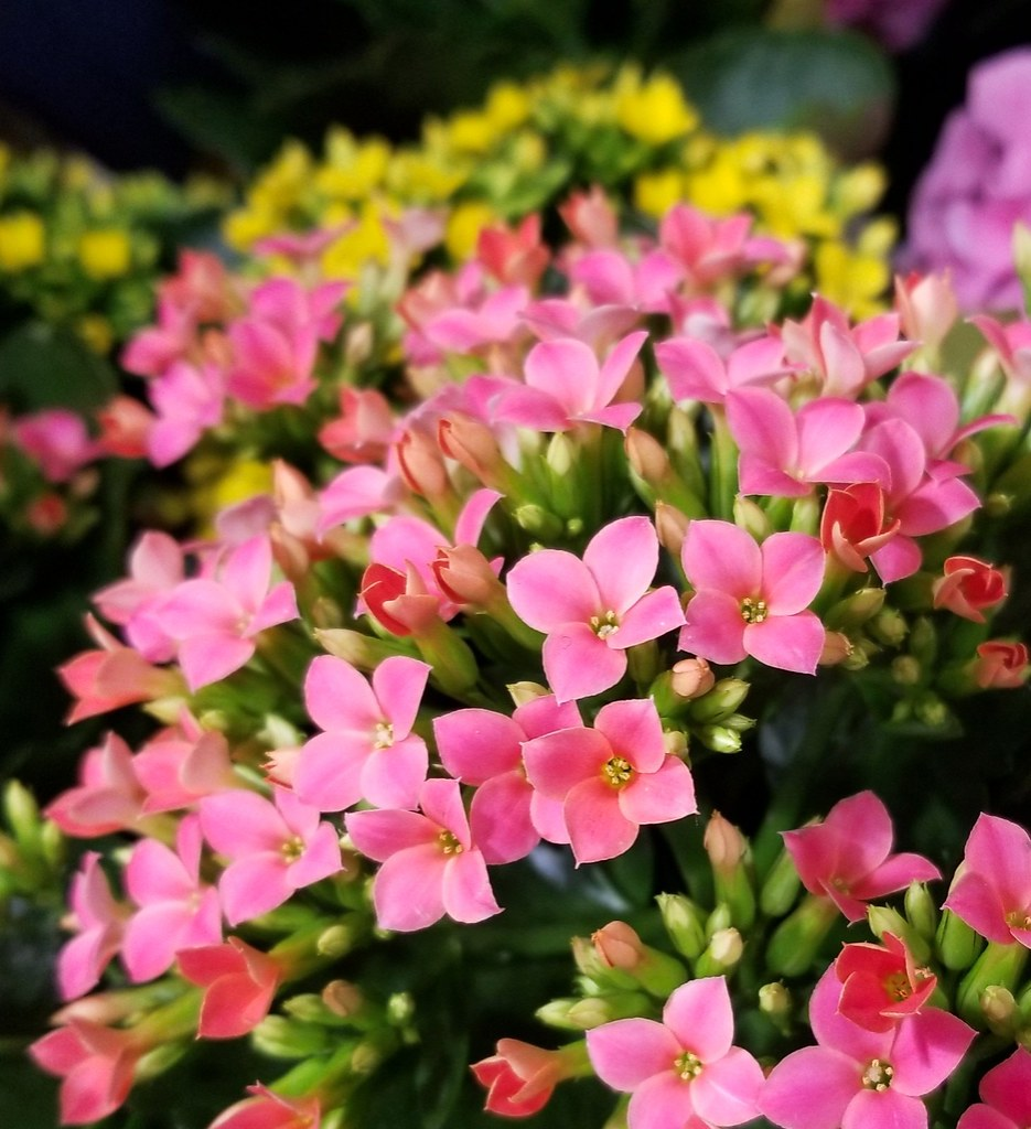 Pretty Little Flowers2018 04 22 Wintersoul1 Flickr