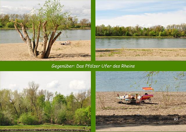 Waldpark am Rhein in Mannheim ... Rheinpromenade, Waldpark, Strandbad ... Foto(s): Brigitte Stolle